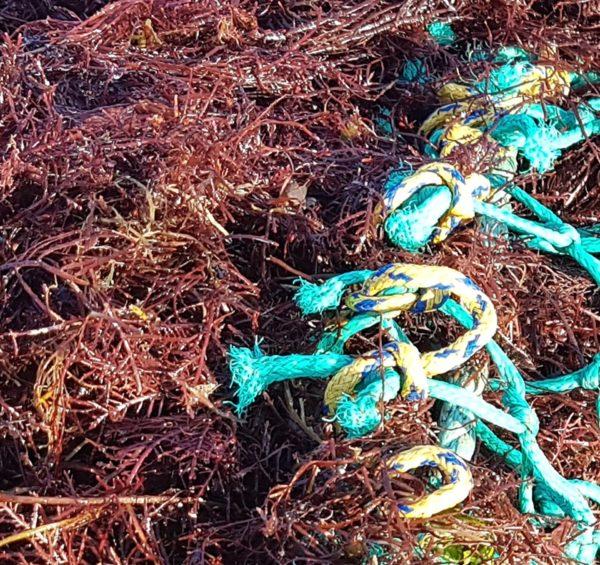 Fiche-projet valorisation algues - photo 2