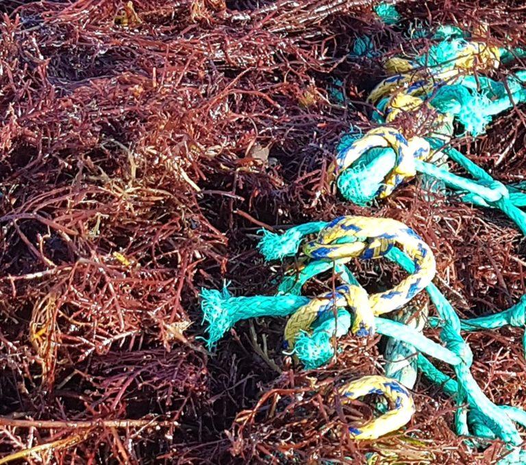 Fiche-projet valorisation algues – photo 2